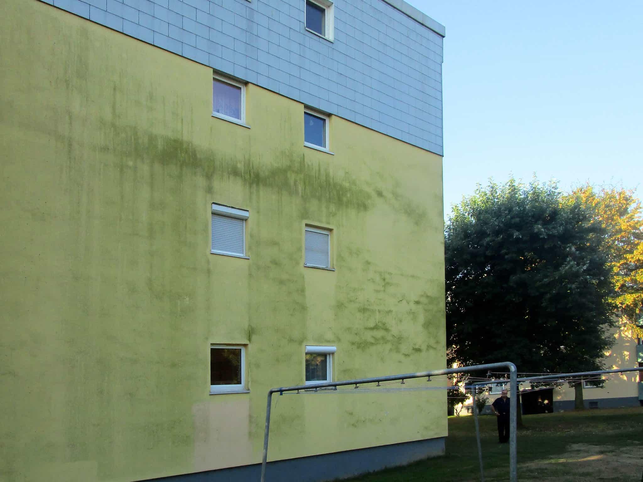 Fassade mit Grünalgen verschmutzt (15 Jahre alt)